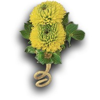 Chartreuse Chrysanthemum Boutonniere