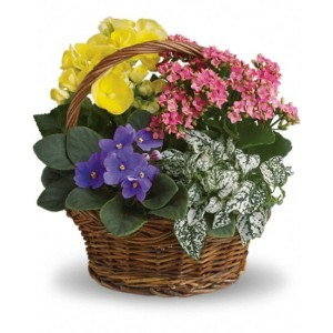 Spring Has Sprung Mixed Planter Basket
