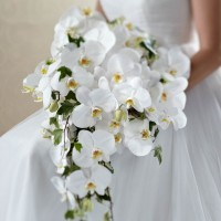 Classic White Phalaenopsis Orchid Bouquet